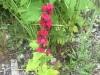 mystery-flower-bb88f42a5260f785fa30300228024642869fcc22
